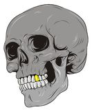 Skull. Grey skull with gold tooth Royalty Free Stock Image