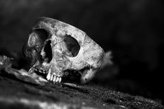 Skull001 Fotografie Stock Libere da Diritti