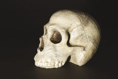 Skull. A skull on the black background Royalty Free Stock Photos