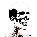 Skull 4 Royalty Free Stock Images