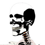 Skull 5 Royalty Free Stock Photo
