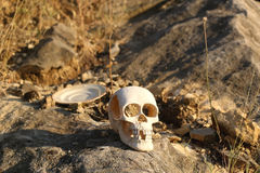 skull Foto de Stock Royalty Free