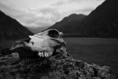 skull Fotos de Stock Royalty Free