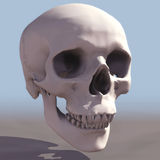 Skull. 3D Human Skull royalty free illustration