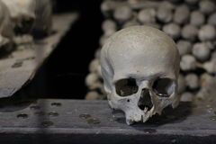 skull Imagem de Stock Royalty Free