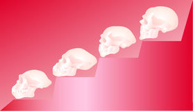 Skull. On stairway of the evolutions Stock Photography