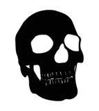 Skull Stock Images