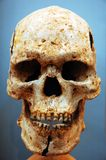 Skull. An ancient human skull with blue background Stock Photo