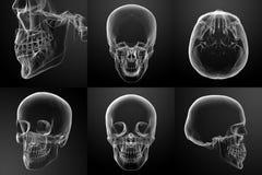 skull Fotos de Stock