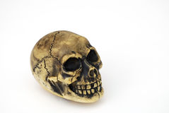 Skull. Made of hard plastic Royalty Free Stock Photography