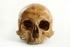 Skull. Of the person on a white background Stock Photo