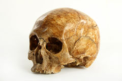 Skull. Of the person on a white background Stock Image