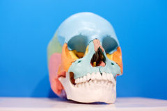 Skull aids Royalty Free Stock Image