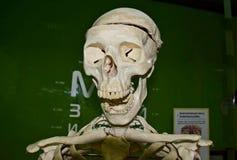 Skull, anatomy stock photo