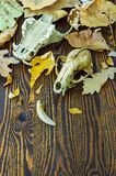 Skull of an animal on autumn leaves Royalty Free Stock Image