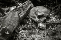 Skull on ashes Stock Photography