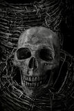 Skull and barb wire Stock Photography