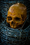 Skull and barb wire Stock Photos