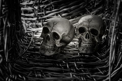 Skull and barb wire Royalty Free Stock Images