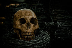 Skull and barb wire Stock Photo