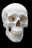 Skull on black. Background for lab education Royalty Free Stock Photo