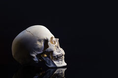 Skull on black backdrop Royalty Free Stock Images