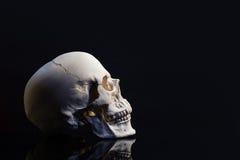 Skull on black backdrop royalty free stock images