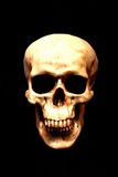 Skull. On black background Royalty Free Stock Photography