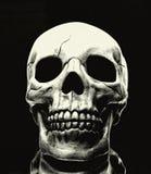 Skull. On black background royalty free stock photos