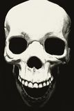 Skull. On black background Royalty Free Stock Images
