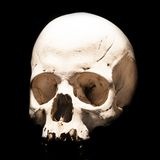 Skull on black background Stock Photo