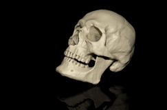 Skull and black background Royalty Free Stock Photography