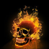Skull on black background. Stock Photos