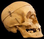 Skull on black backround Stock Photos