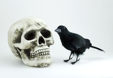 Skull and black crow Stock Images