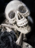 Skull and black rose Stock Image