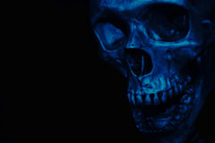 Skull on black background Royalty Free Stock Photography