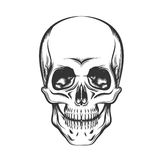 The Skull Stock Photo