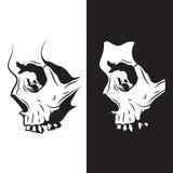 Skull black white. Skull of Skeleton - Scary Evil Head, Vector Illustration on white and black background Royalty Free Stock Photo