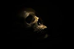 Skull bone in darkroom. Spotlight Shines on skull in dark room Royalty Free Stock Photography