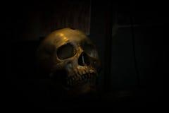 Skull bone in darkroom. Spotlight Shines on skull in dark room Stock Image
