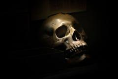 Skull bone in darkroom. Spotlight Shines on skull in dark room Stock Photos