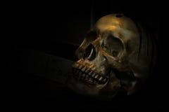 Skull bone in darkroom. Spotlight Shines on skull in dark room Stock Photo