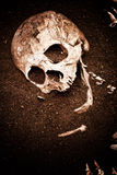 Skull and bone Royalty Free Stock Photography