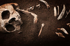 Skull and bone Stock Photography