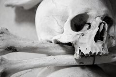 Skull and bones Stock Image