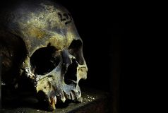Skull. The bones crypt in UK Stock Images