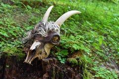 Skull and bones of dead animal. stock photos
