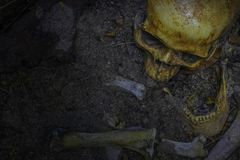 Skull and bones digged out from pit in the scary graveyard. Do n royalty free stock image