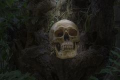 Skull and bones digged out from pit in the scary graveyard found in the jungle. Do not know gender, do not know the name, wait for. Proof of results./Still life royalty free stock images